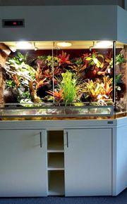 Paludarium Terrarium für Pfeilgiftfrösche P03