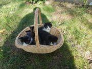 Wird suchen 2 Kätzchen fürs