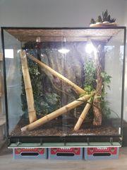 Terrarium mit Madagaskar Taggecko und
