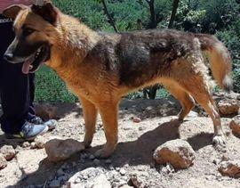 Tierschutzvereine, -heime - Vuchko wünscht sich SEINEN Lebensplatz -