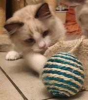Kätzchen suchen eine liebevolle Familie