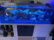 Meerwasser Korallen Wirbellose Fische