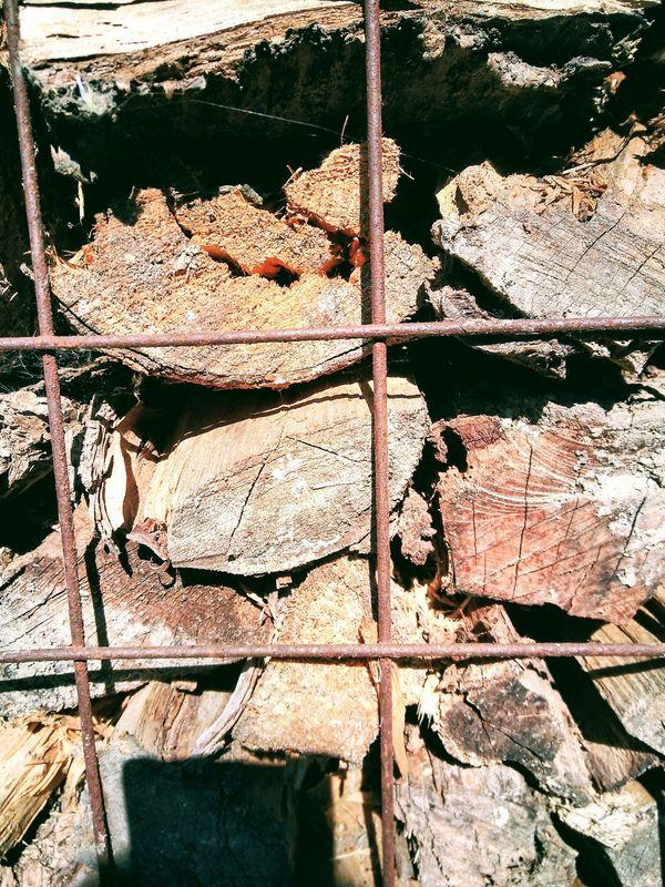 Brennholz Kaminholz Feuerholz Anlieferung möglich