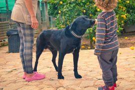 TROY Pastor Mallorquin - Familienhund sehr: Kleinanzeigen aus Rabenau - Rubrik Hunde