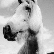 Suche Reitlehrer für mein Pferd