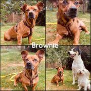 Kleine Brownie wartet noch auf