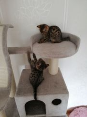 Katzen Kitten Mix