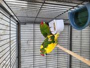 2 Vögel mit großem Käfig