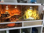 Spornschildkröte Terrarium Landschildkröte