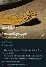 Reptilien Verkaufsgruppe WhatsApp