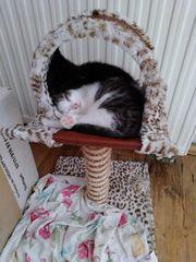 Katzenkinder zu verschenken