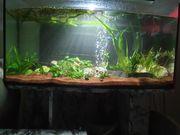 Aquarium mit Zubehör und extras
