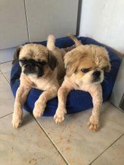 Hugo und Nelly wollen ihre