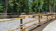 Holzstangen natur aus Kastanie rund