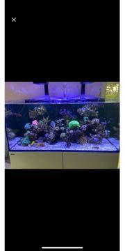 Meerwassersaquarium Red Sea Delux 425