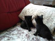 Zwei junge Kätzchen zu verschenken