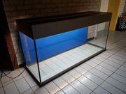240 Liter MP Eheim Aquarium