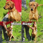 Milan möchte mit seinen Menschen