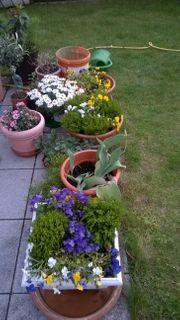 div Topfpflanzen und Gartenpflanzen zum