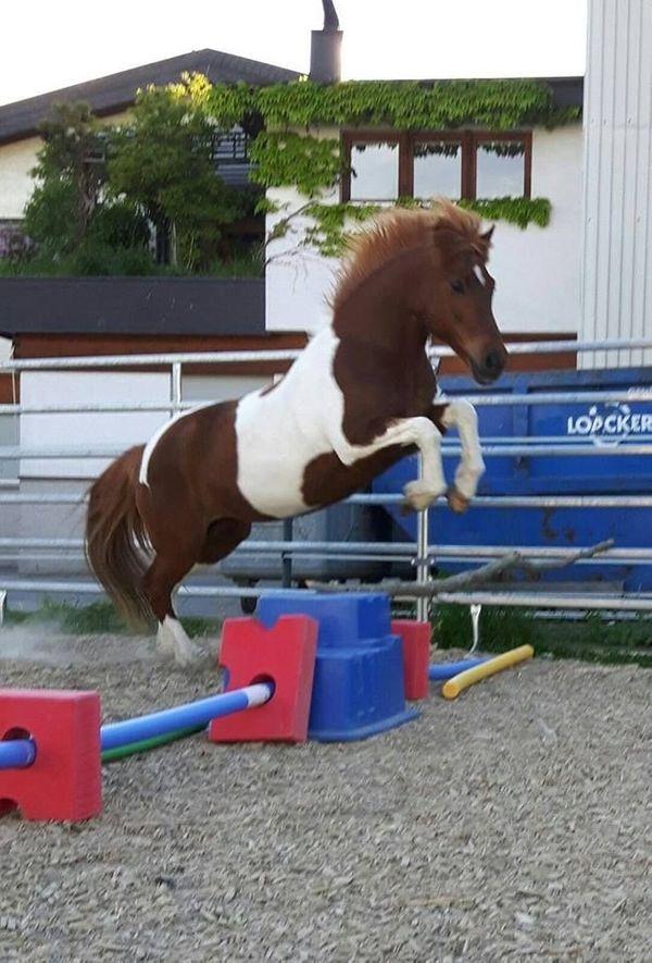 Suche Pony für geführtes Reiten