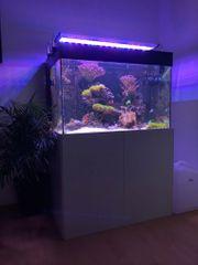 250L Meerwasseraquarium komplett