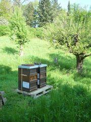 Standort Obstwiese Gütle für Bienen
