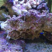 Lebendgestein Riffsteine für Meerwasseraquarium - Meerwasser