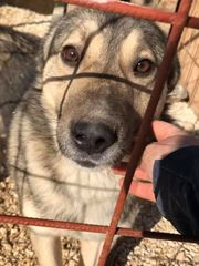 freundlicher ehemaliger Kettenhund Mischlingsrüde Samy