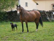 Pferdefreunde aufgepasst Bauernhaus Reiterhof--Resthof