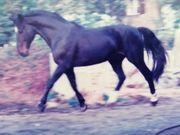 Ihr Pferd lahmt der TA