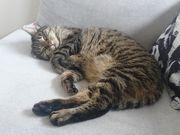 Suche Katzensitter für Juni