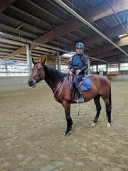 Reitbeteiligung an rittigem Pferd gesucht