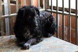 Aiden - Angsthase taut langsam auf: Kleinanzeigen aus Kirchzell - Rubrik Hunde