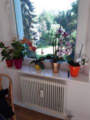Verschiedene Blumen und Pflanzen