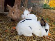 Kaninchen-Trio aus dem Tierschutz sucht