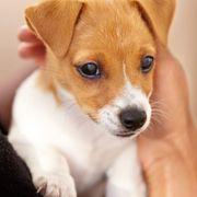 Verschenken hundewelpen kostenlos zu Mischlingswelpen, Welpen