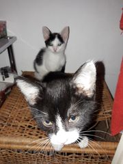 2 Süße Katzen Baby s