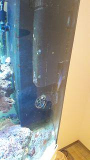 Meerwasser Aquariumkombination Juwel Vision
