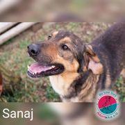 Sanaj - träumt schon lange von
