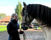 Möglichkeit zur Pferdehaltung PLZ 64319