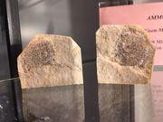 Versteinerung Ammonit mit Dentriten
