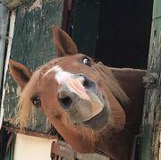 Beistellpferd sucht neuen Platz