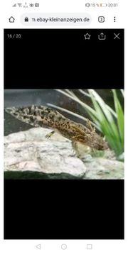Axolotl Starter Sets