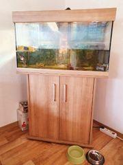 Aquarium mit Unterschrank 2 wasserschildkröten