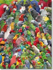 Nehme Ara Kakadu Amazonen Graupapageien