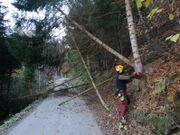 Holzarbeiten - Baumdienste