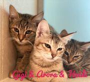 Mutterkatze Bella mit Kitten Gigi