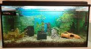 Aquarium 100 Liter mit viel