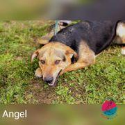 Angel - I m loving Angel
