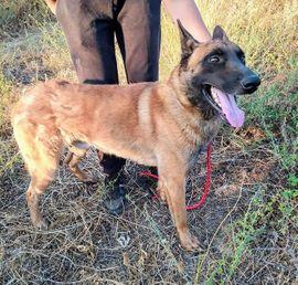 Dimal - leuchtende Augen voller Hoffnung: Kleinanzeigen aus Mettmann - Rubrik Hunde